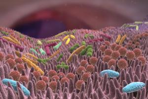 Darmfloraanalyse